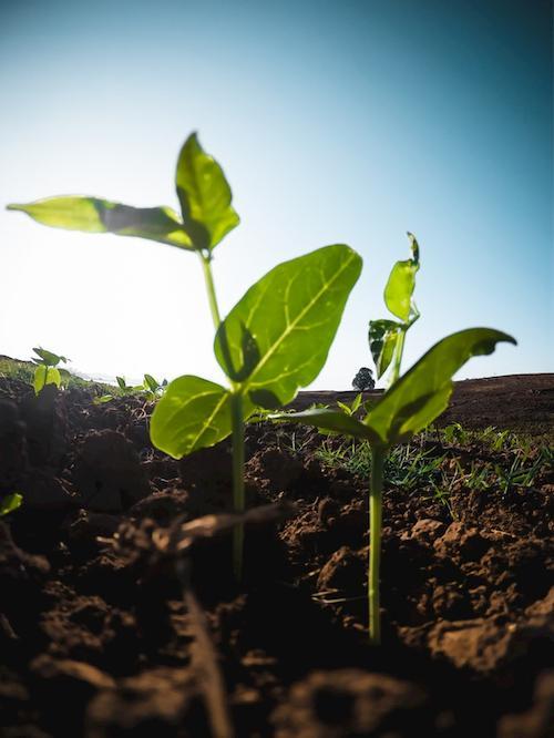 Digitalisierung Landwirtschaft