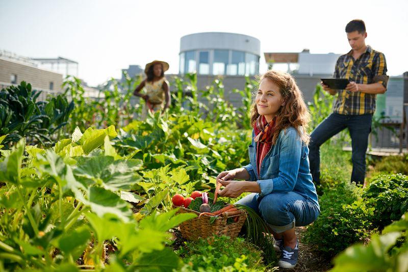 Nachhaltigkeit in der Landwirtschaft