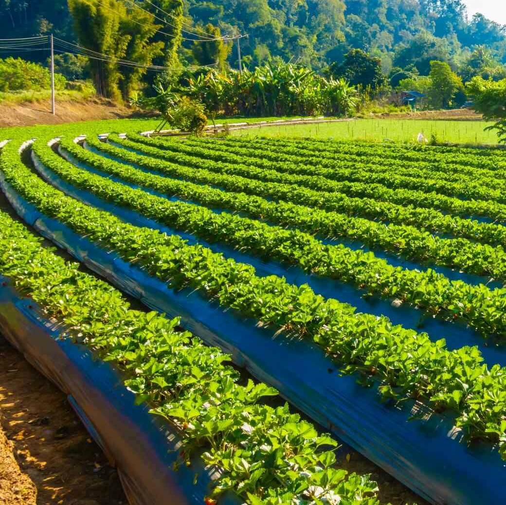 Förderung Landwirtschaft (1)